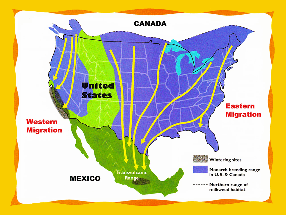 Monarch Migration - Monarch erfly USA on map of early islam, map of early europe, map of early agriculture, map of early colonization, map of early history,