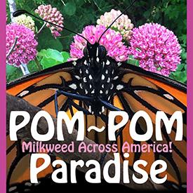 Pom Pom Paradise
