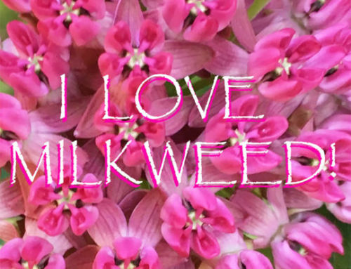 Milkweed: Get the Facts