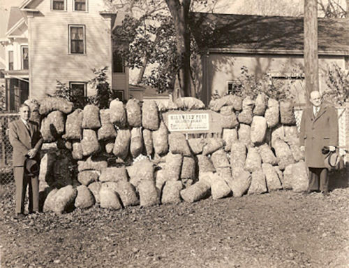 Milkweed & the Allied War Effort