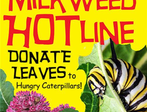 Milkweed Hotline